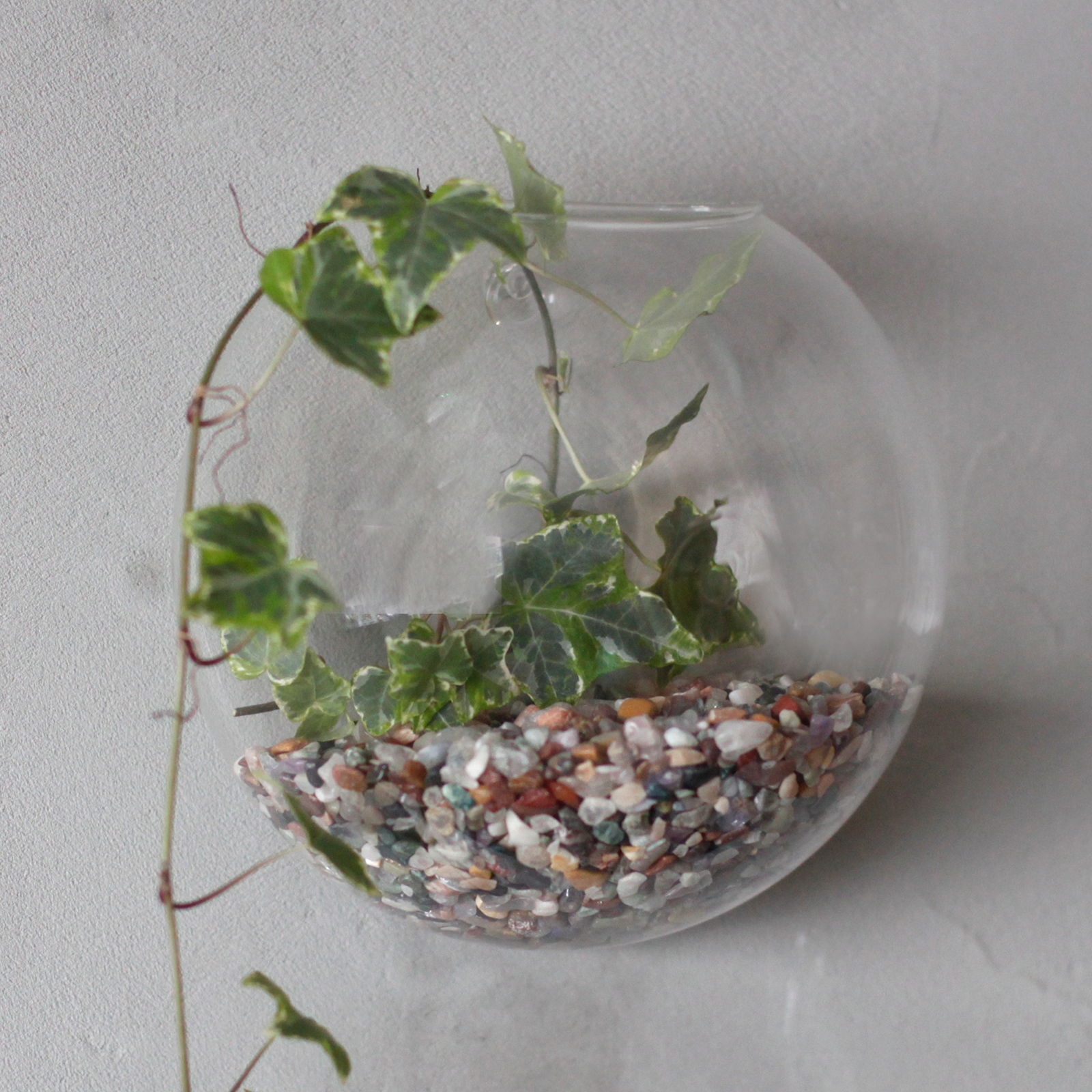 All Glass Terrarium -Small Hanging Wall Bowl