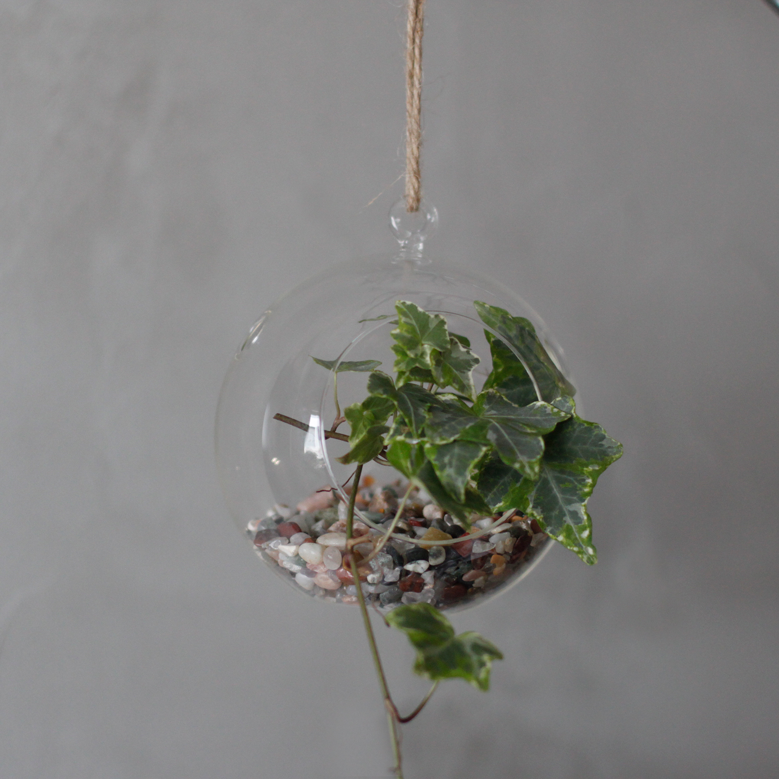 All Glass Terrarium -Globe Hanging Wall Bowl