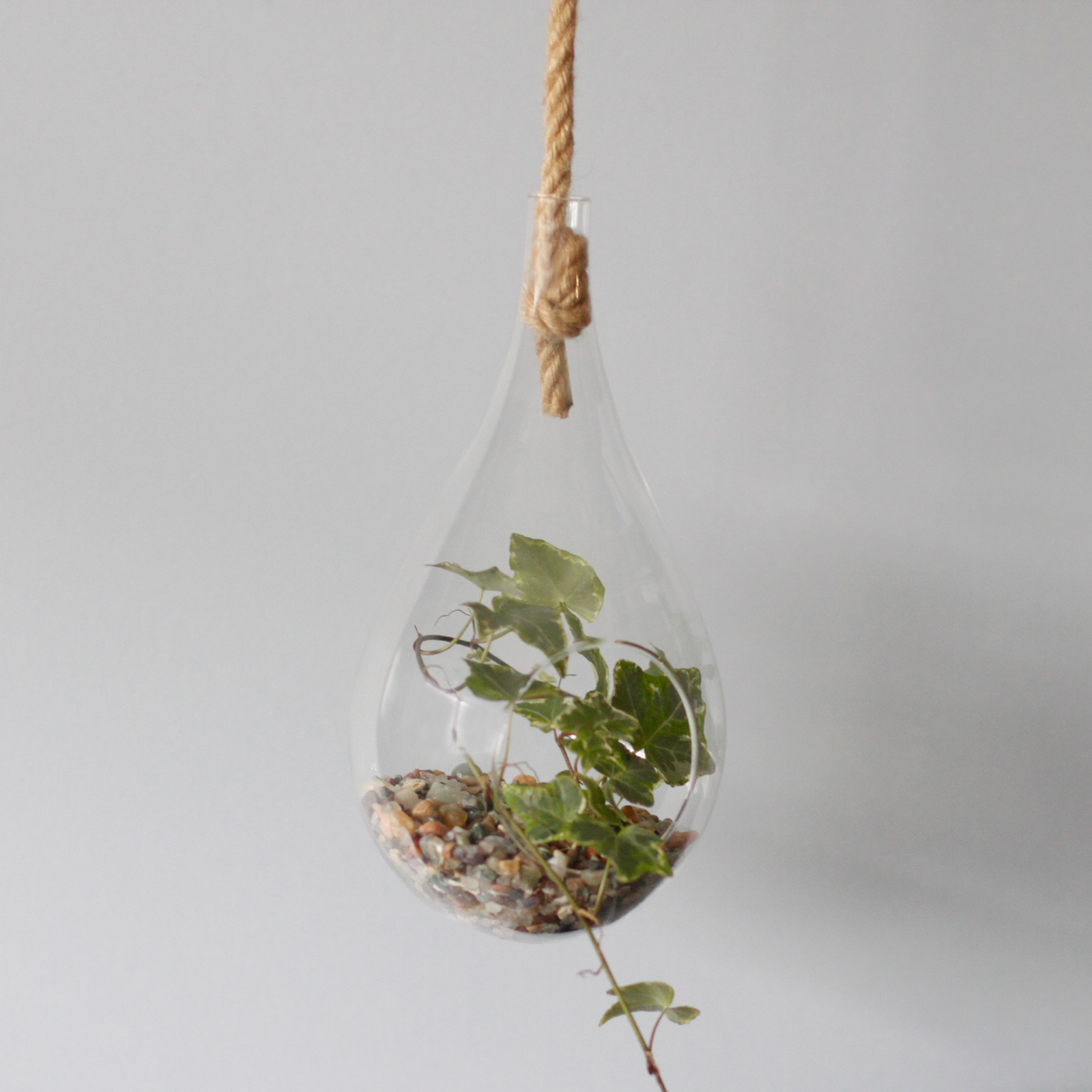 All Glass Terrarium -Hanging Teardrop  on Rope