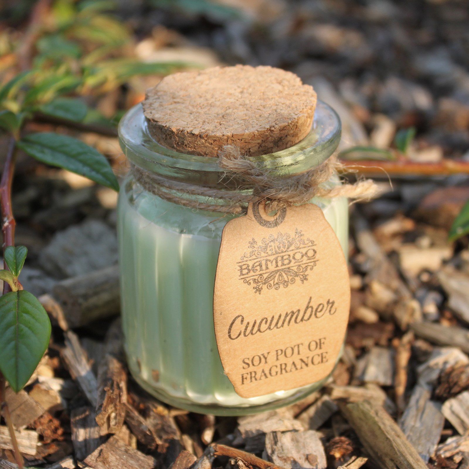 2x Cucumber Soy Pot of Fragrance Candles
