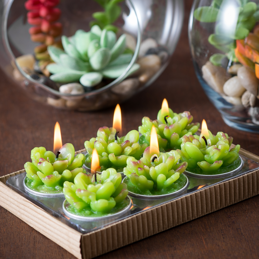Succulent Cactus Tealights in Gift Box